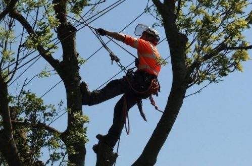 Lone worker tree surgeon environmental